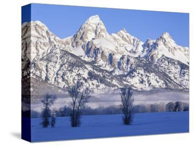 Snowcapped Mountains and Bare Tree, Grand Teton National Park, Wyoming, USA