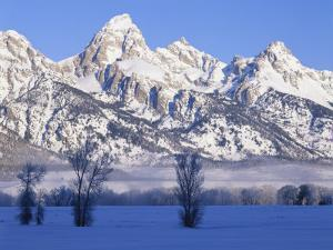 Snowcapped Mountains and Bare Tree, Grand Teton National Park, Wyoming, USA by Scott T. Smith