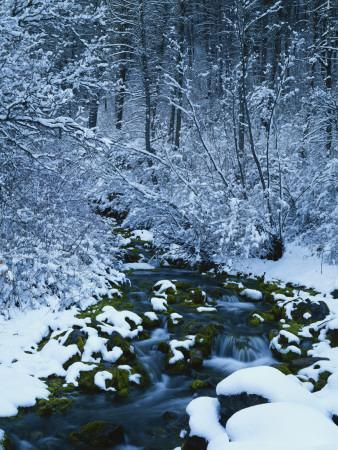 Spring-Fed Creek in Winter, Wasatch-Catch National Forest, Utah, USA