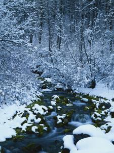 Spring-Fed Creek in Winter, Wasatch-Catch National Forest, Utah, USA by Scott T^ Smith