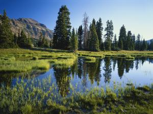 Trees and Grass Reflecting in Pond, High Uintas Wilderness, Wasatch National Forest, Utah, USA by Scott T. Smith