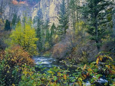 Utah. Along Logan River in Autumn. Logan Canyon. Uinta-Wasatch-Cache