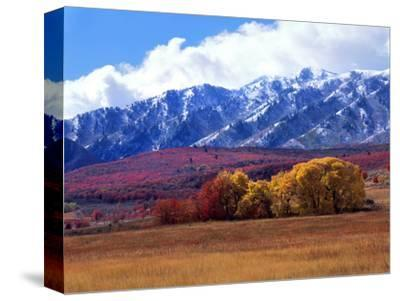 Utah. Autumn Snow on Wellsville Mts Above Maple and Cottonwood Trees