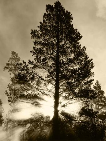 View of Sunbeam Through Trees, Yellowstone National Park, Wyoming, USA