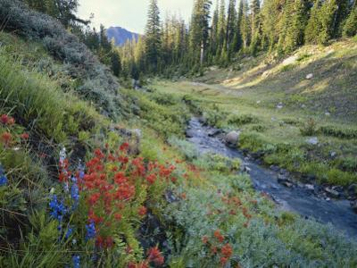 Wildflowers Along Chamberlain Creek, White Cloud Peaks, Sawtooth National Reservation Area, Idaho