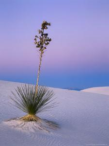 Yucca on Dunes at Dusk, Heart of the Dunes, White Sands National Monument, New Mexico, USA by Scott T^ Smith