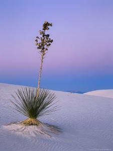 Yucca on Dunes at Dusk, Heart of the Dunes, White Sands National Monument, New Mexico, USA by Scott T. Smith