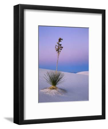 Yucca on Dunes at Dusk, Heart of the Dunes, White Sands National Monument, New Mexico, USA