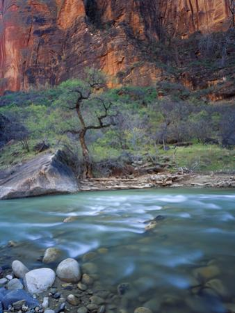 Zion Canyon, Zion National Park, Utah, USA by Scott T. Smith