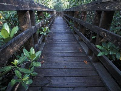Walkway at a Nature Refuge on Vieques Island, Puerto Rico