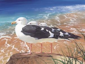 Tidewater Trio by Scott Westmoreland