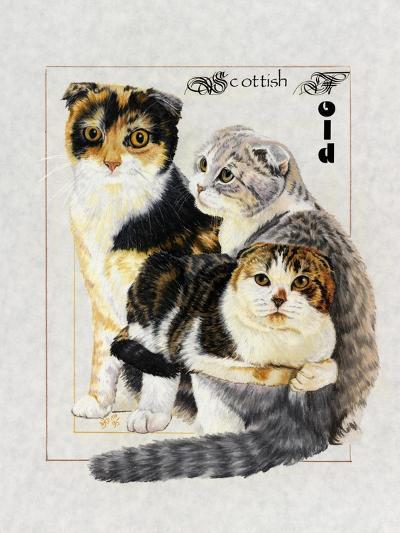 Scottish Fold-Barbara Keith-Giclee Print