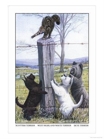 https://imgc.artprintimages.com/img/print/scottish-terrier-west-highland-terrier-skye-terrier_u-l-p294850.jpg?p=0