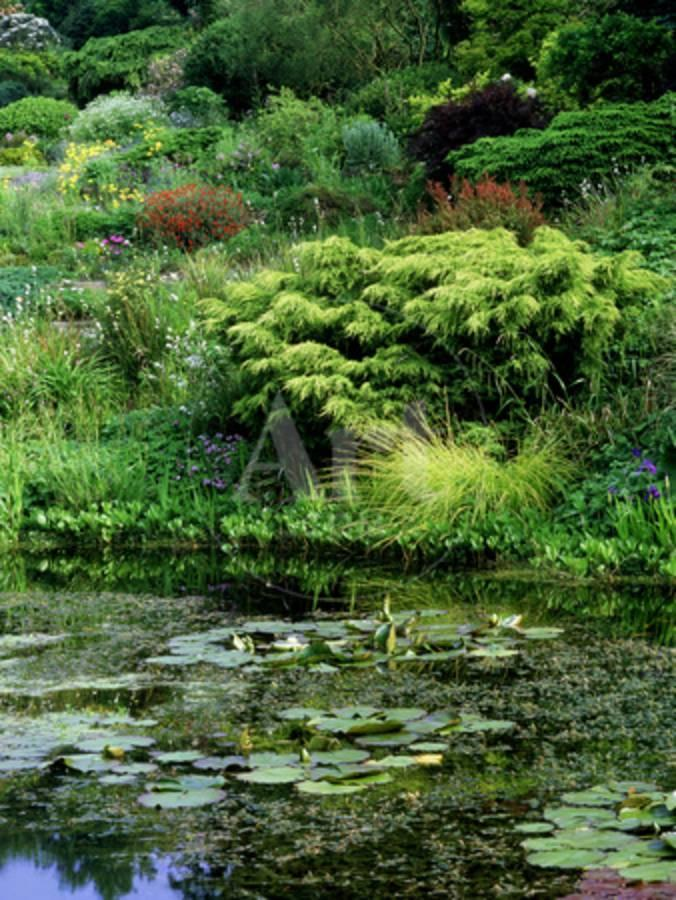 Scree Garden Leading Down to Pond, Shrubs and Conifers, Colourful ...