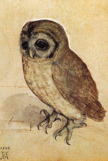 Screech Owl--Art Print