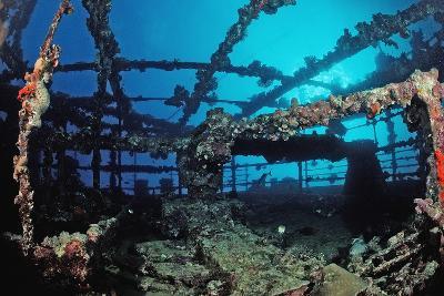 Scuba Diver Diving on Umbria Shipwreck, Sudan, Africa, Red Sea, Wingate Reef-Reinhard Dirscherl-Photographic Print