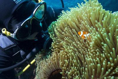 Scuba Diver with False Clown Anenomefish, Magnificent Sea Anemone, Cairns, Queensland, Australia-Louise Murray-Photographic Print