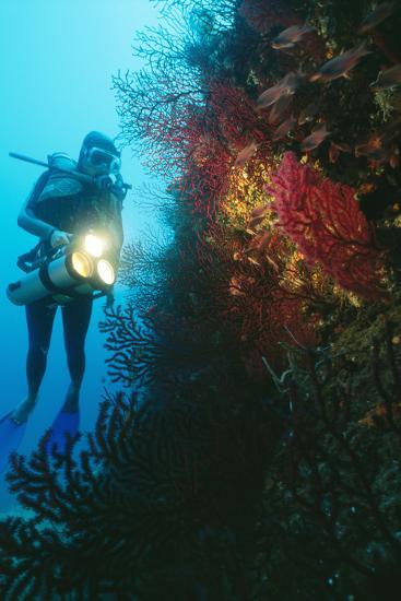 Scuba Diver-Alexis Rosenfeld-Photographic Print