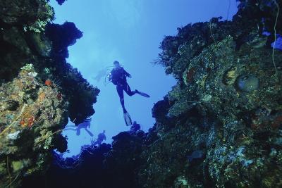 Scuba Divers-Alexis Rosenfeld-Photographic Print