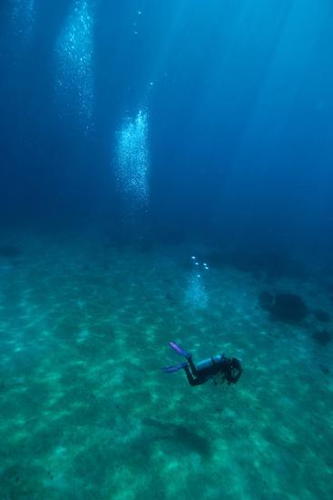 Scuba Diving-Matthew Oldfield-Photographic Print