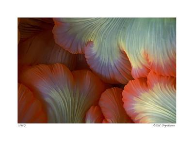 Sea Anemone-Jones-Shimlock-Giclee Print