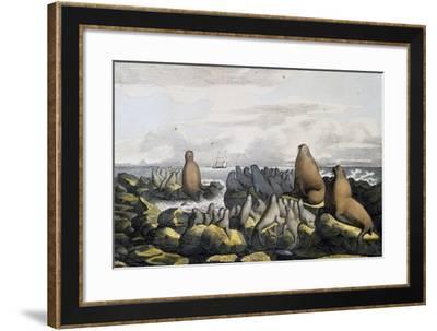 Sea Bears from Saint Paul Island--Framed Giclee Print
