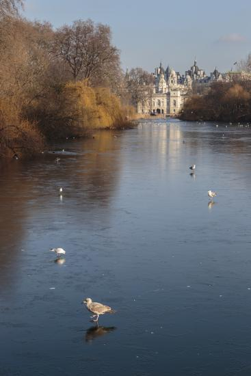 Sea Birds (Gulls) on Ice Covered Frozen Lake with Westminster Backdrop in Winter-Eleanor Scriven-Photographic Print