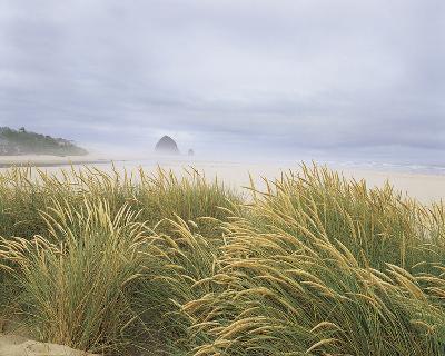 Sea Breeze Dunes-Adam Brock-Giclee Print