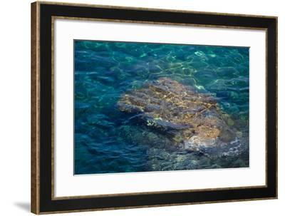 Sea, Corsica--Framed Photographic Print