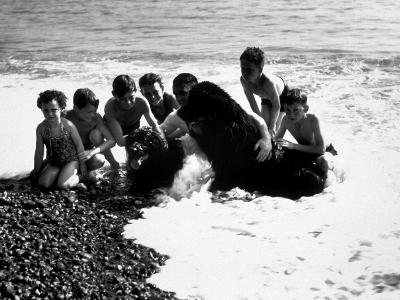 Sea Dogs--Photographic Print