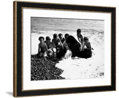 Sea Dogs--Framed Photographic Print