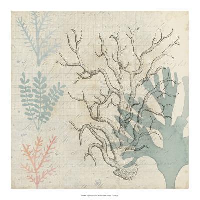 Sea Ephemera II-Grace Popp-Art Print