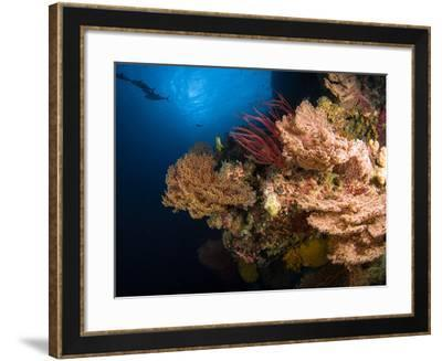 Sea Fans And Sea Whips, Australia-Stocktrek Images-Framed Photographic Print
