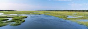 Sea Grass in the Sea, Atlantic Coast, Jacksonville, Florida, USA