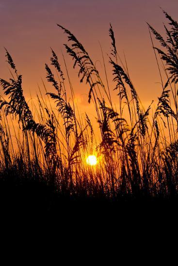 Sea Grass Silhouetted At Sunrise-Brian Gordon Green-Photographic Print