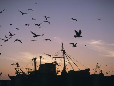 Sea Gulls Flying over Fishing Boats at Dusk in the Harbor-Design Pics Inc-Photographic Print
