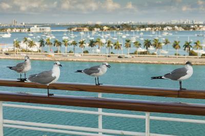 Sea Gulls on Railing of Cruise Ship-Juan Silva-Photographic Print