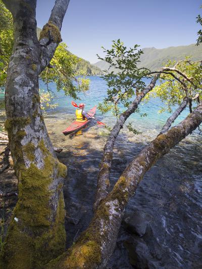 Sea Kayaker with Alder (Alnus Rubra), Crescent Lake, Washington, USA-Gary Luhm-Photographic Print