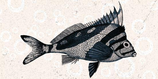 Sea Life 2-Kimberly Allen-Art Print