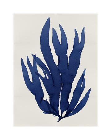 https://imgc.artprintimages.com/img/print/sea-life-indigo-iii_u-l-f8nxbp0.jpg?p=0
