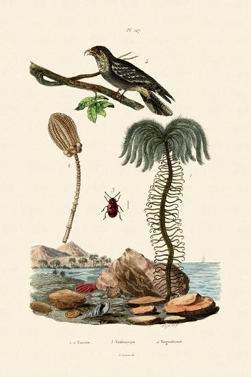 Sea Lily, 1833-39--Giclee Print