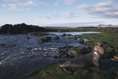 Sea Lion on Galapagos Islands-DLILLC-Photographic Print
