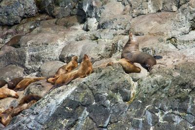 Sea Lions on Rock-Latitude 59 LLP-Photographic Print
