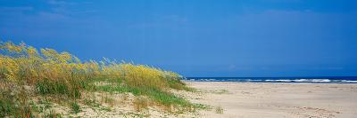 Sea Oat Grass on the Beach, Charleston, South Carolina, USA--Photographic Print