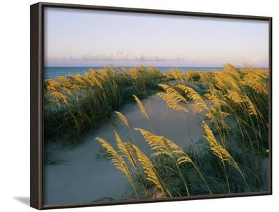 Sea Oats, Dunes, and Beach at Oregon Inlet-Skip Brown-Framed Photographic Print