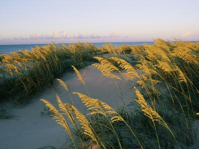 Sea Oats, Dunes, and Beach at Oregon Inlet-Skip Brown-Photographic Print
