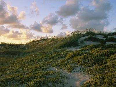Sea Oats, Dunes, and Beach at Oregon Inlet--Photographic Print
