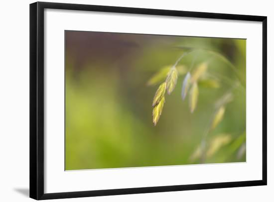 Sea Oats Grass-Cora Niele-Framed Photographic Print