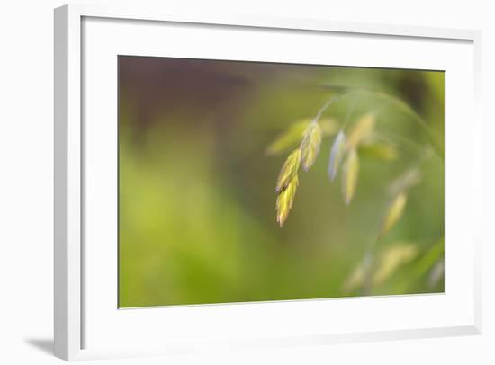 Sea Oats Grass-Cora Niele-Framed Photographic Print