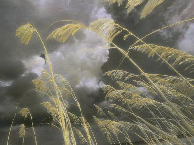 Sea Oats Grow Along a Dune on a South Carolina Barrier Island-Annie Griffiths Belt-Photographic Print